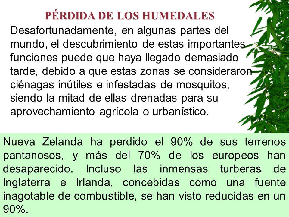 PÉRDIDA DE LOS HUMEDALES