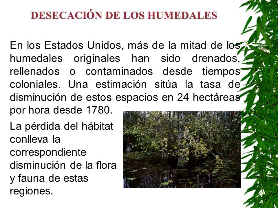 DESECACIÓN DE LOS HUMEDALES