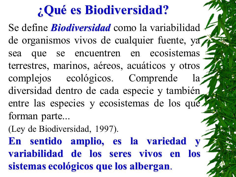 ¿Qué es Biodiversidad