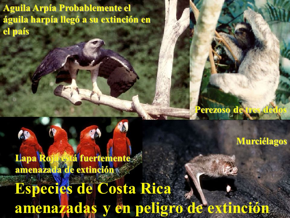 amenazadas y en peligro de extinción