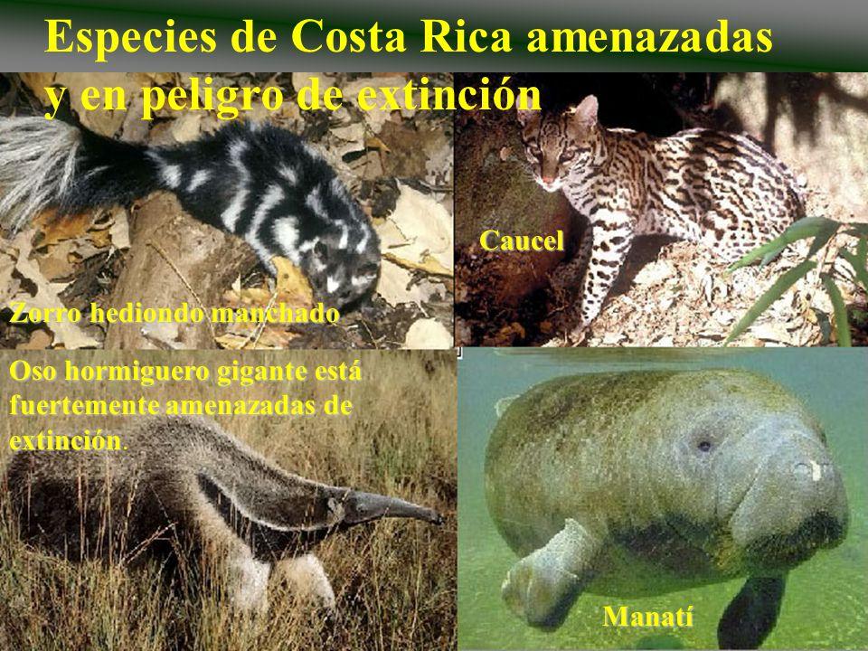 Especies de Costa Rica amenazadas y en peligro de extinción