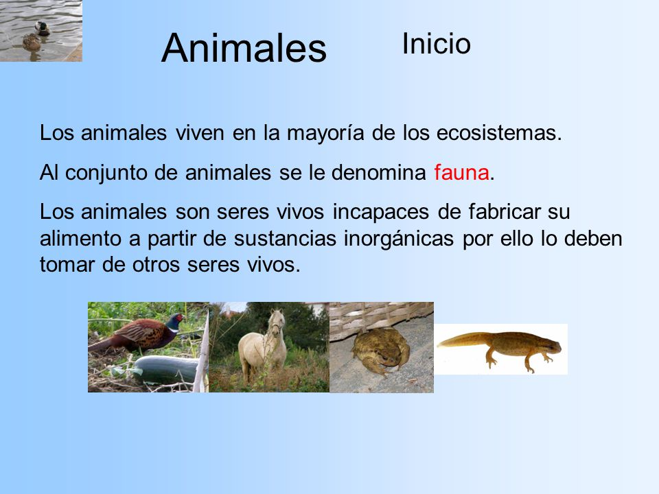 Animales Inicio Los animales viven en la mayoría de los ecosistemas.