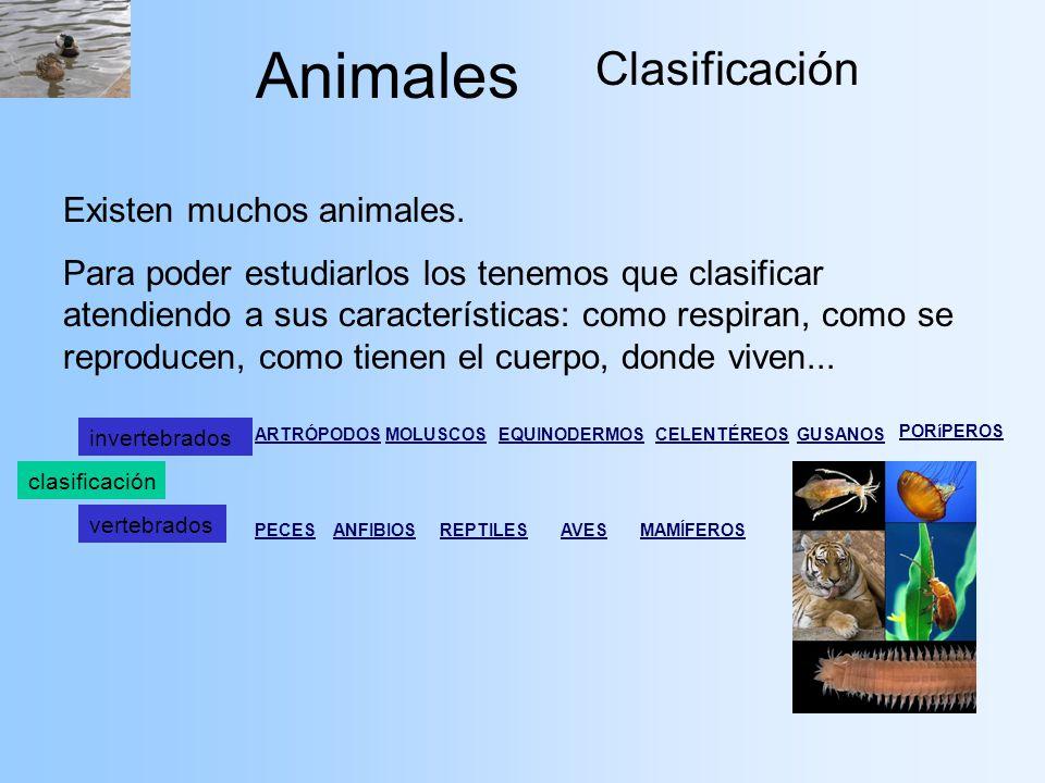 Animales Clasificación Existen muchos animales.