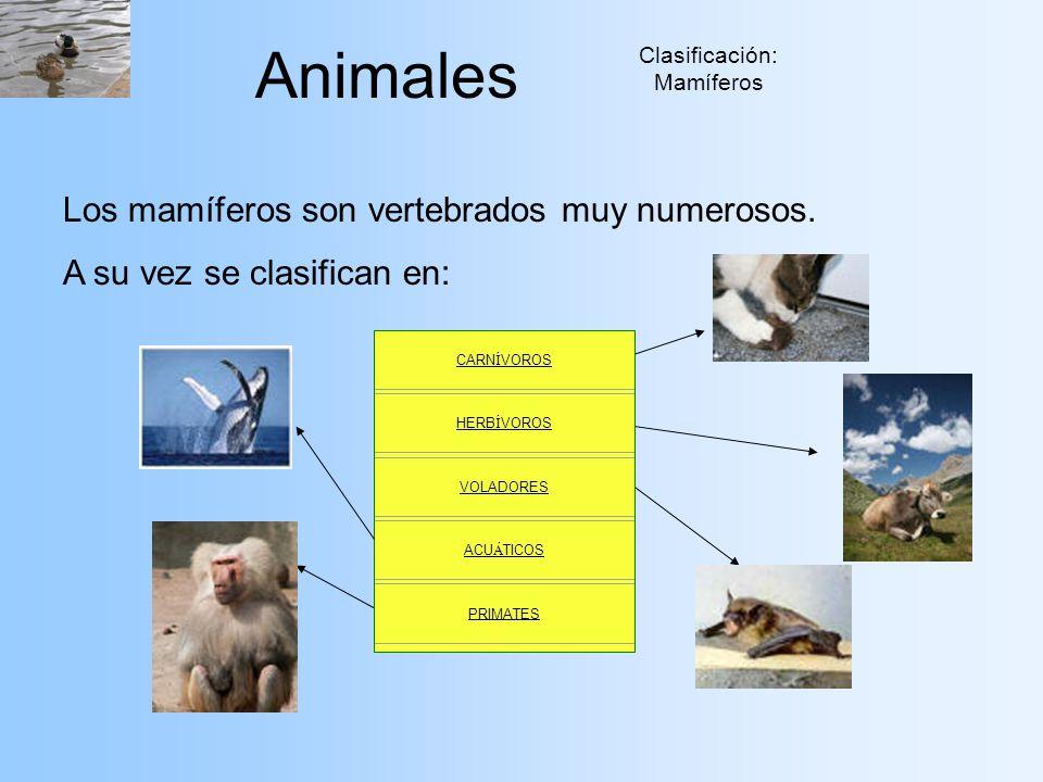 Clasificación: Mamíferos