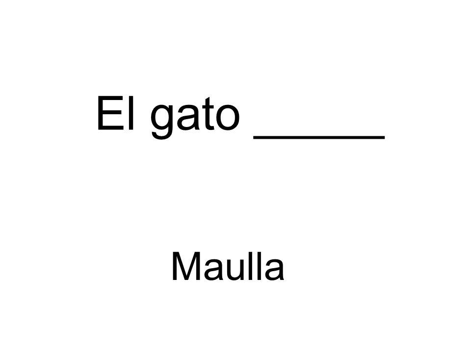El gato _____ Maulla