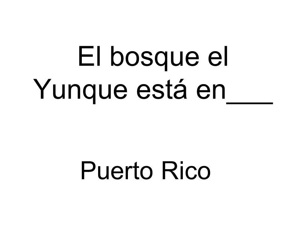 El bosque el Yunque está en___