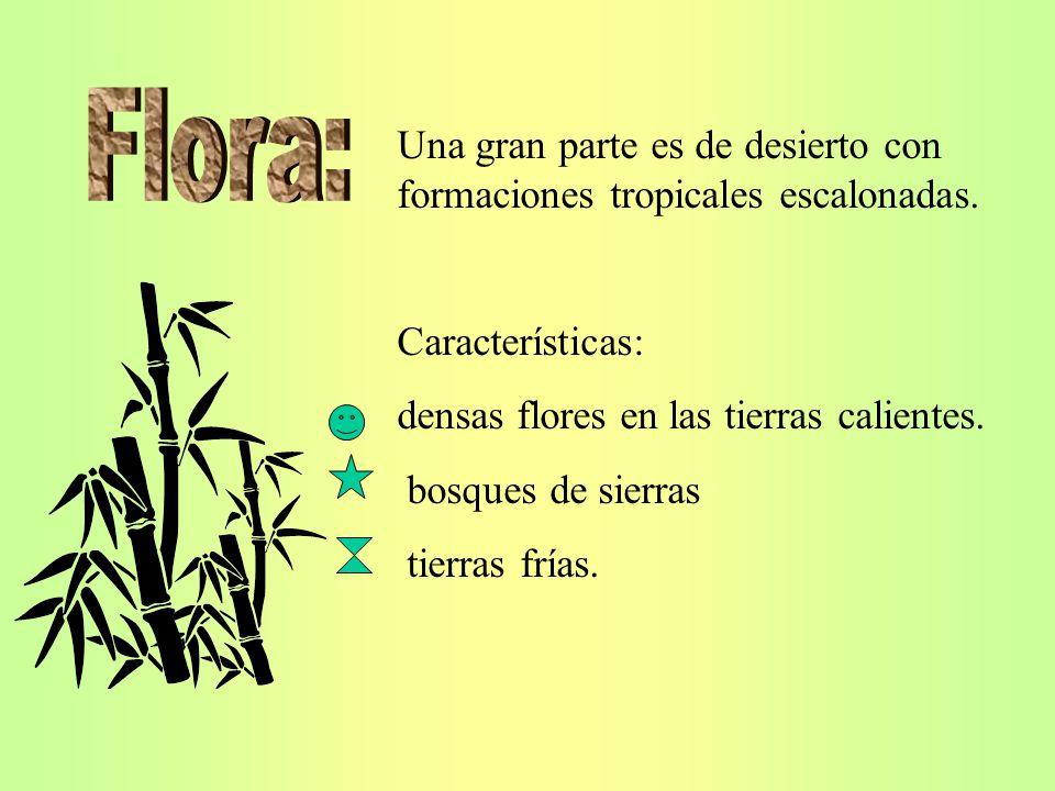 Flora: Una gran parte es de desierto con formaciones tropicales escalonadas. Características: densas flores en las tierras calientes.