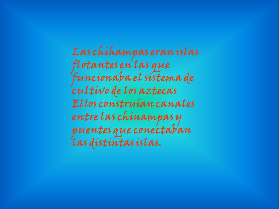 Las chihampas eran islas flotantes en las que funcionaba el sistema de cultivo de los aztecas Ellos construían canales entre las chinampas y puentes que conectaban las distintas islas.