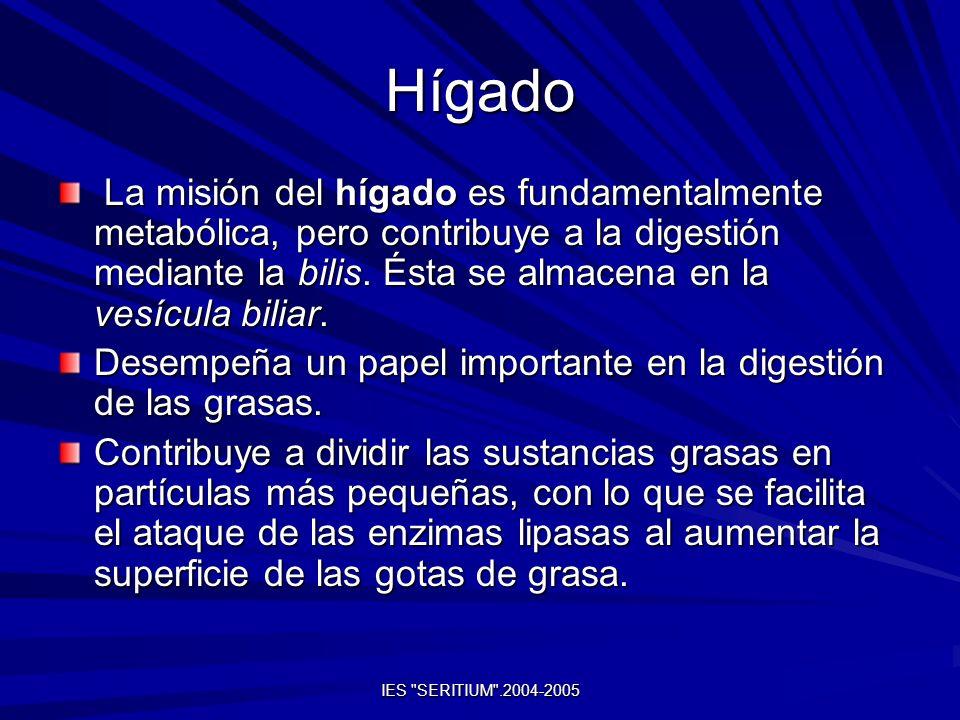 HígadoLa misión del hígado es fundamentalmente metabólica, pero contribuye a la digestión mediante la bilis. Ésta se almacena en la vesícula biliar.