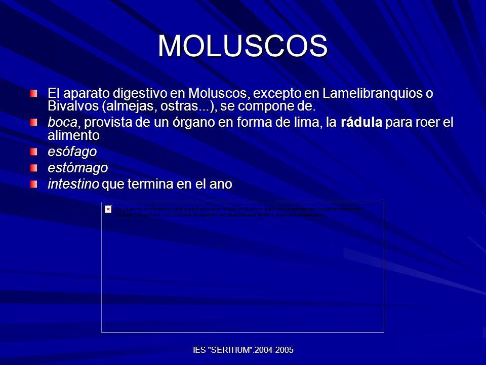 MOLUSCOSEl aparato digestivo en Moluscos, excepto en Lamelibranquios o Bivalvos (almejas, ostras...), se compone de.
