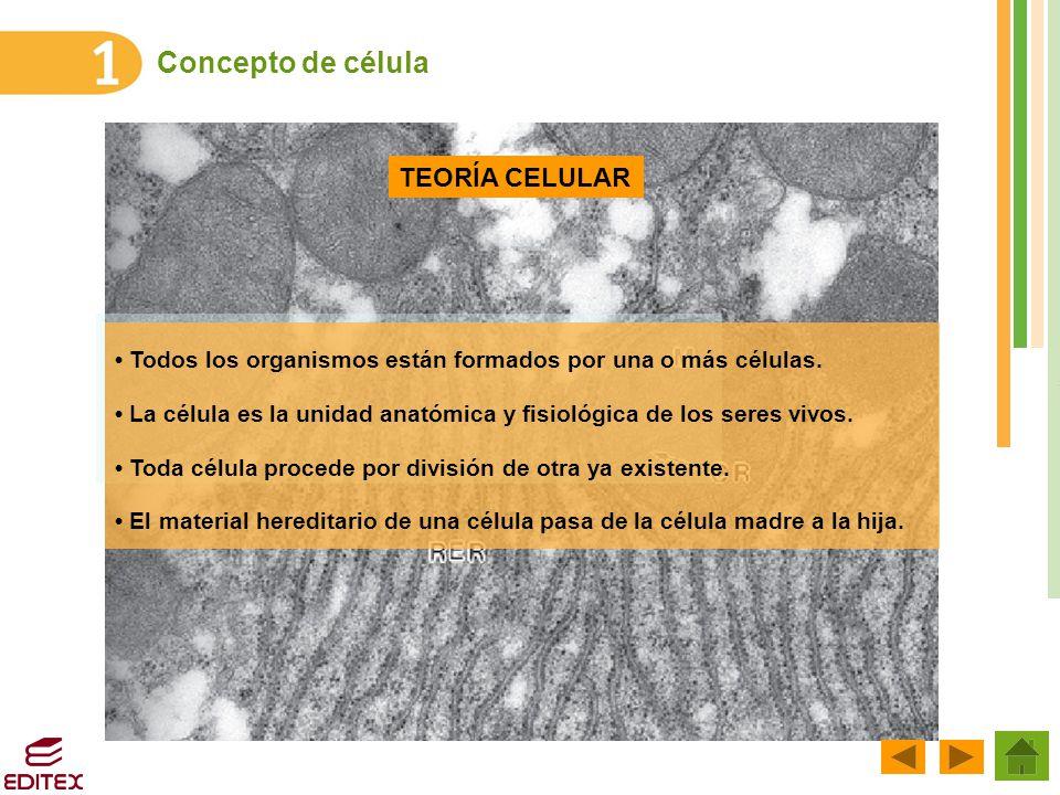 Excelente Anatomía Y Fisiología De La Célula Humana Ornamento ...