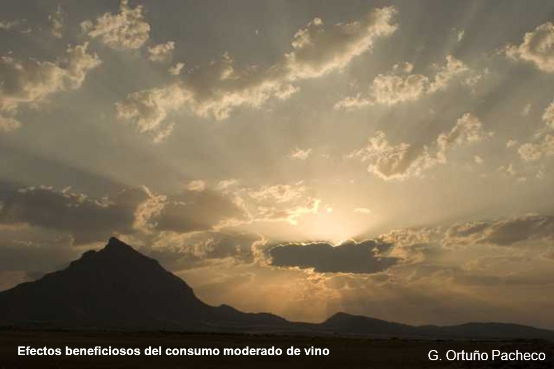 Efectos beneficiosos del consumo moderado de vino