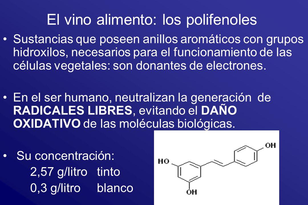 El vino alimento: los polifenoles