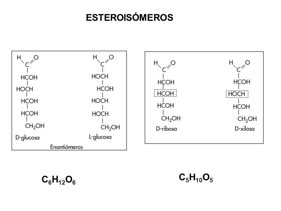 ESTEROISÓMEROS C5H10O5 C6H12O6