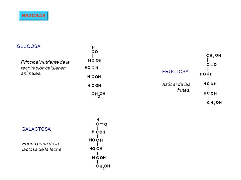 HEXOSAS GLUCOSA. Principal nutriente de la respiración celular en animales. FRUCTOSA. Azúcar de las frutas.