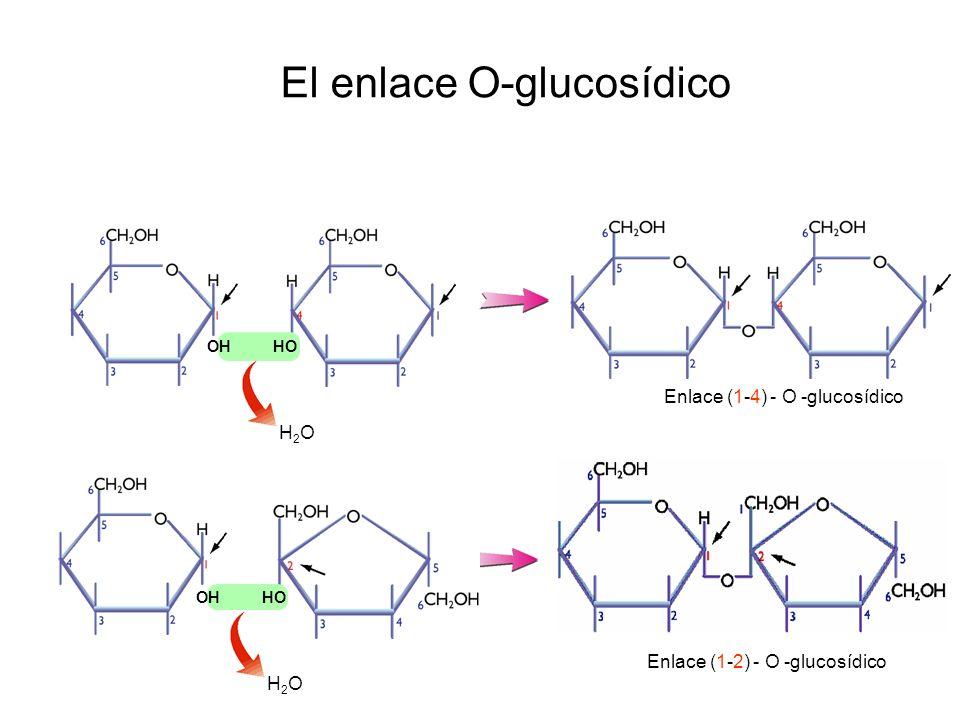 El enlace O-glucosídico