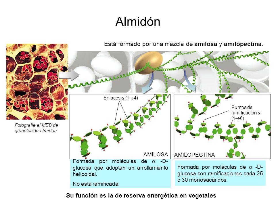 Su función es la de reserva energética en vegetales