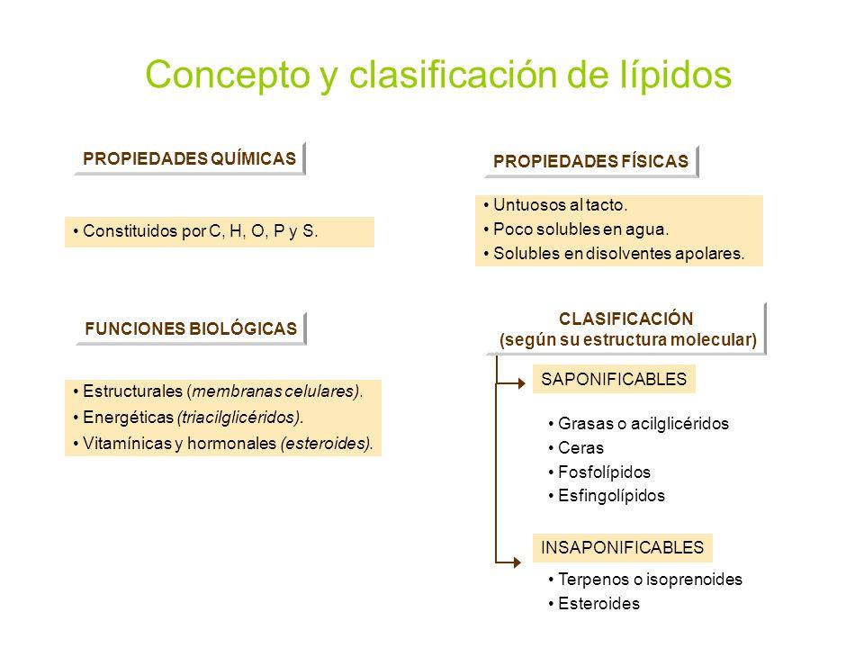 Concepto y clasificación de lípidos