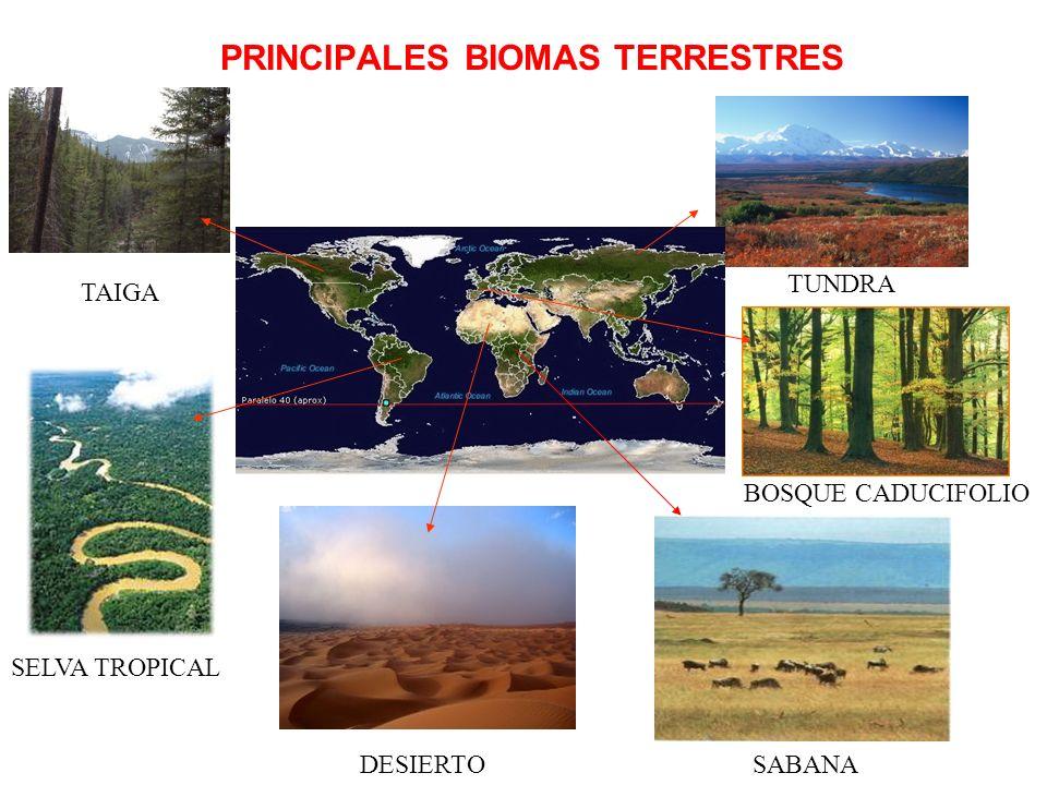 PRINCIPALES BIOMAS TERRESTRES