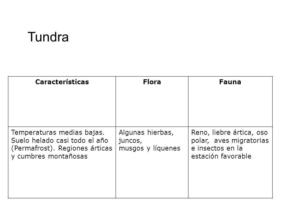 Tundra Características Flora Fauna Temperaturas medias bajas.