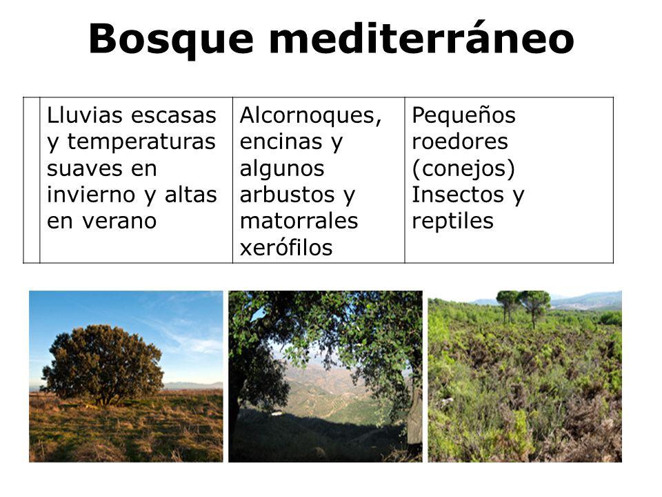 Bosque mediterráneo Lluvias escasas y temperaturas suaves en invierno y altas en verano.