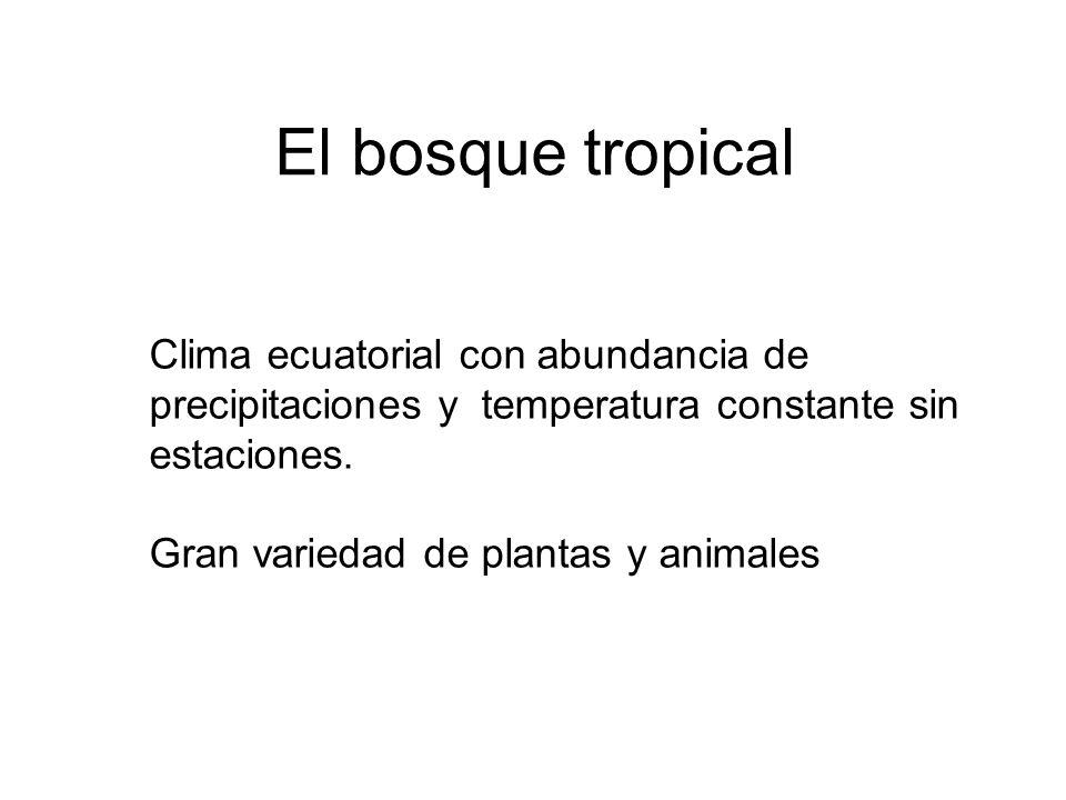 El bosque tropical Clima ecuatorial con abundancia de precipitaciones y temperatura constante sin estaciones.