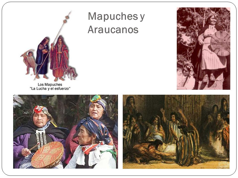 Mapuches y Araucanos