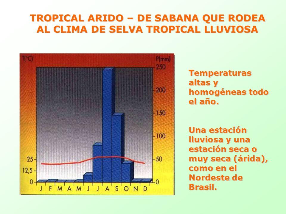TROPICAL ARIDO – DE SABANA QUE RODEA AL CLIMA DE SELVA TROPICAL LLUVIOSA