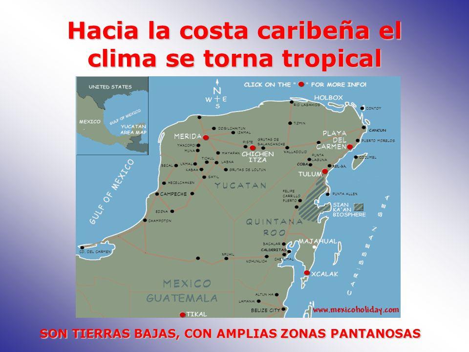 Hacia la costa caribeña el clima se torna tropical