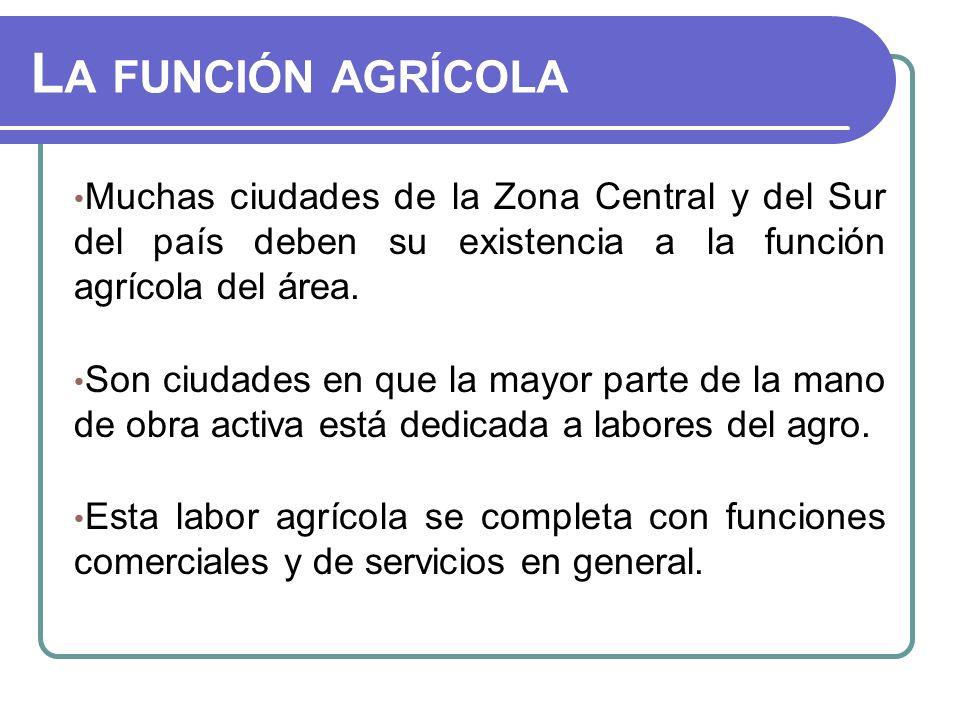 La función agrícola Muchas ciudades de la Zona Central y del Sur del país deben su existencia a la función agrícola del área.