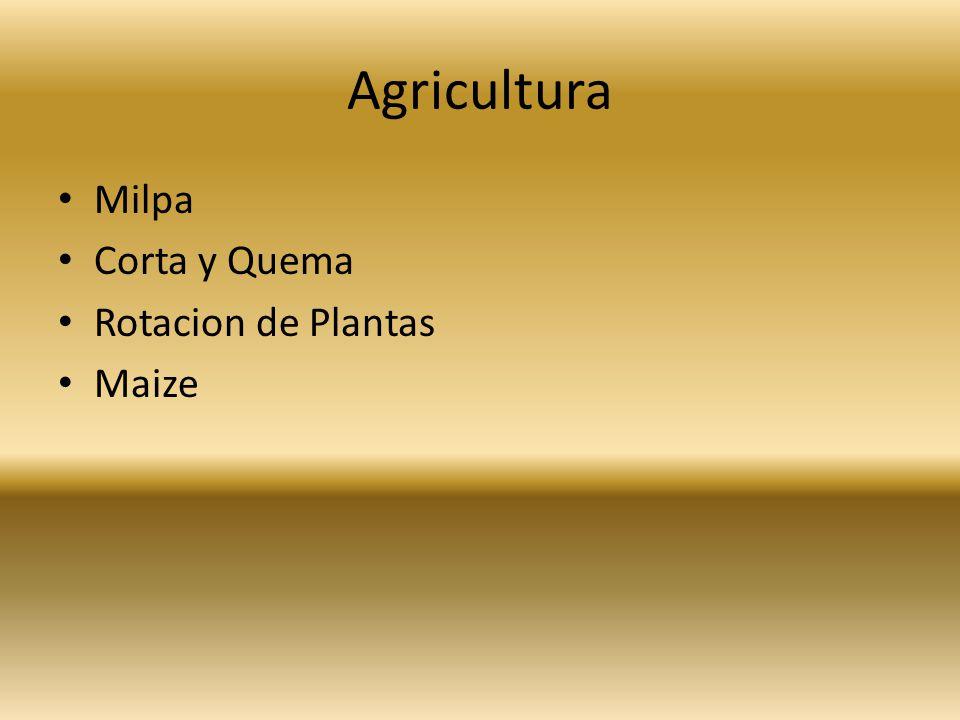 Agricultura Milpa Corta y Quema Rotacion de Plantas Maize