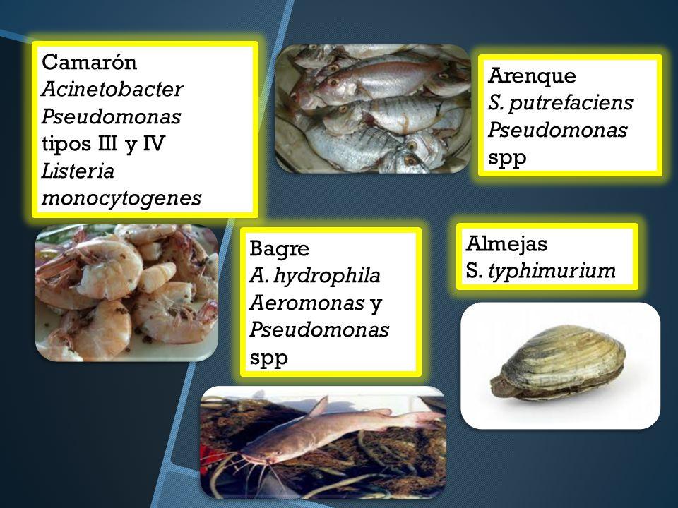 Camarón Acinetobacter. Pseudomonas. tipos III y IV. Listeria monocytogenes. Arenque. S. putrefaciens.
