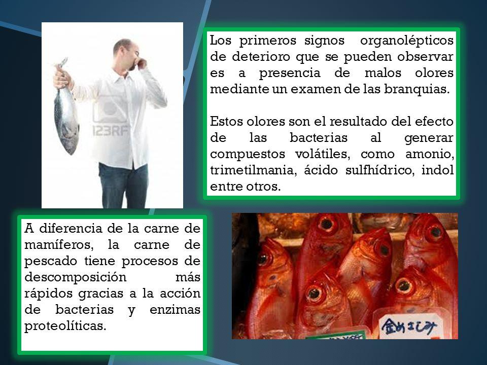 Los primeros signos organolépticos de deterioro que se pueden observar es a presencia de malos olores mediante un examen de las branquias.
