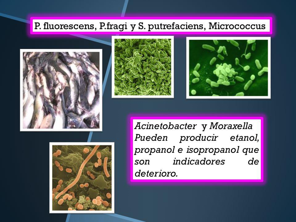 P. fluorescens, P.fragi y S. putrefaciens, Micrococcus