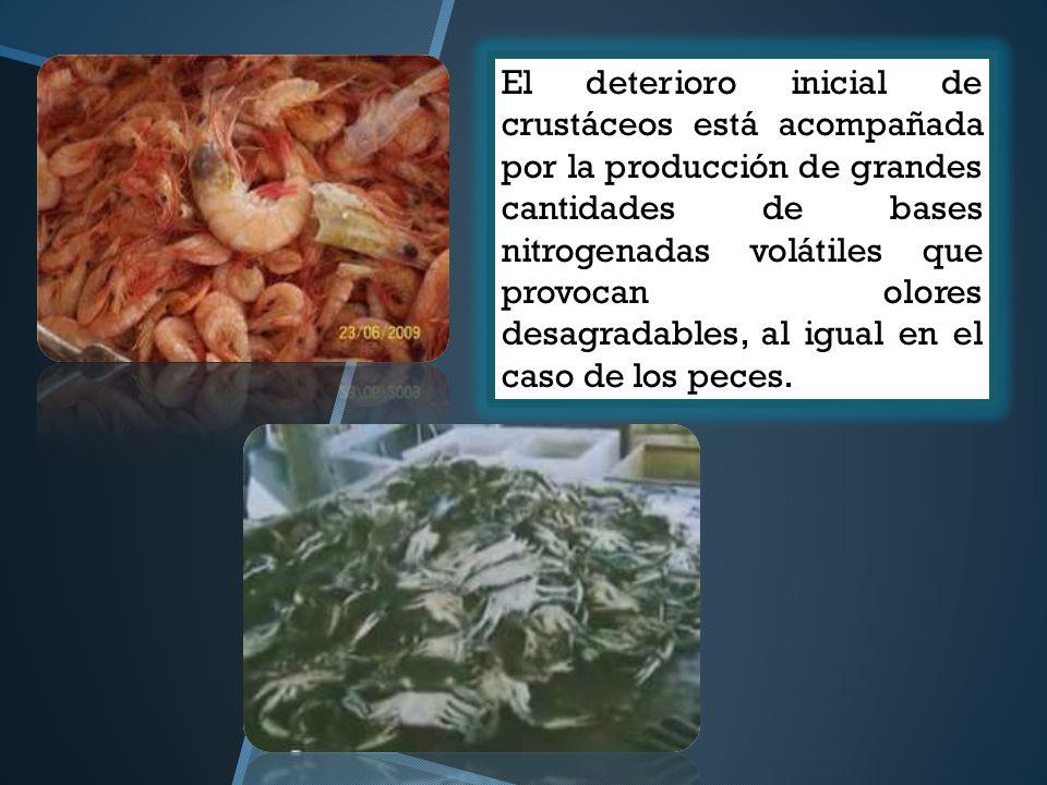 El deterioro inicial de crustáceos está acompañada por la producción de grandes cantidades de bases nitrogenadas volátiles que provocan olores desagradables, al igual en el caso de los peces.