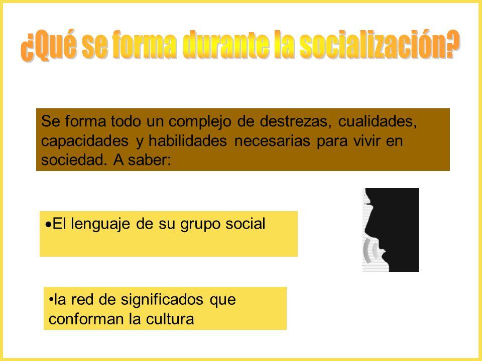 ¿Qué se forma durante la socialización