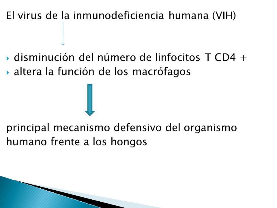El virus de la inmunodeficiencia humana (VIH)