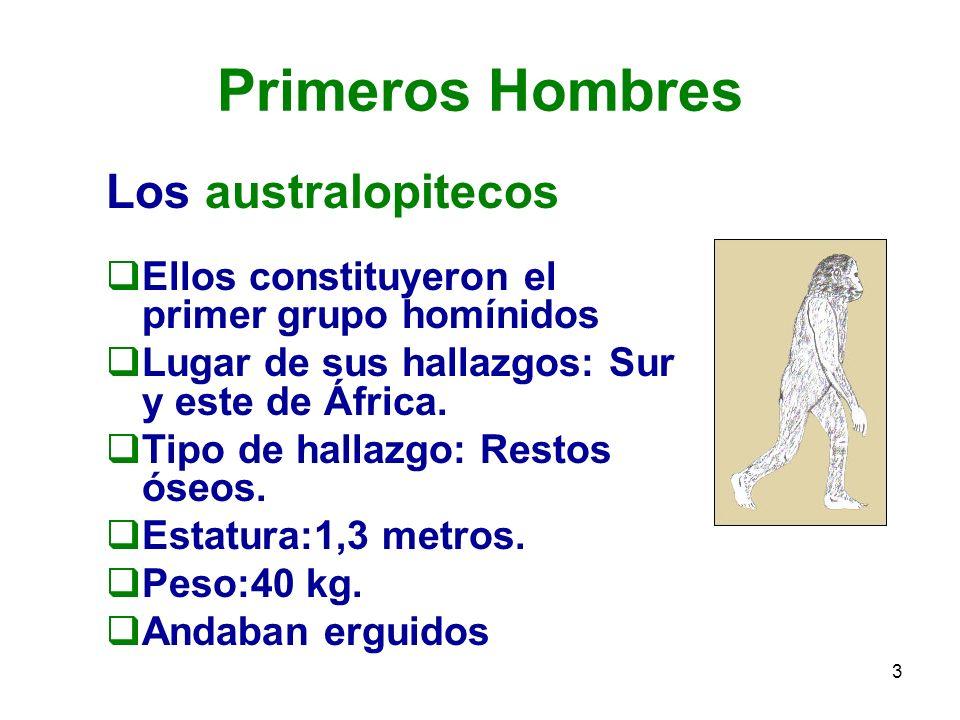 Primeros Hombres Los australopitecos