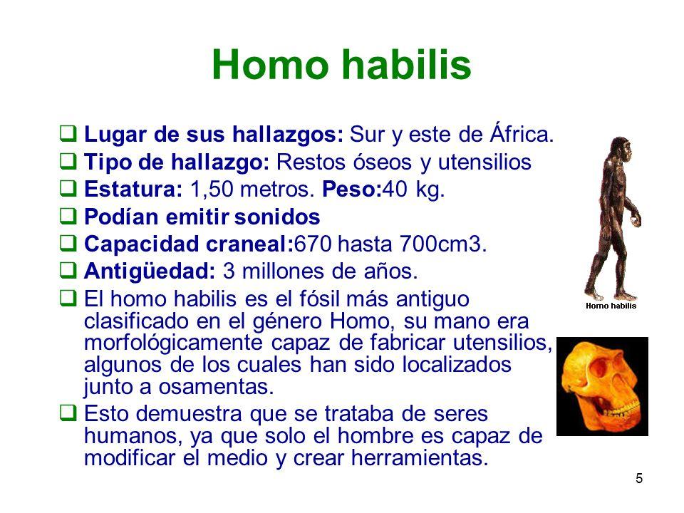 Homo habilis Lugar de sus hallazgos: Sur y este de África.
