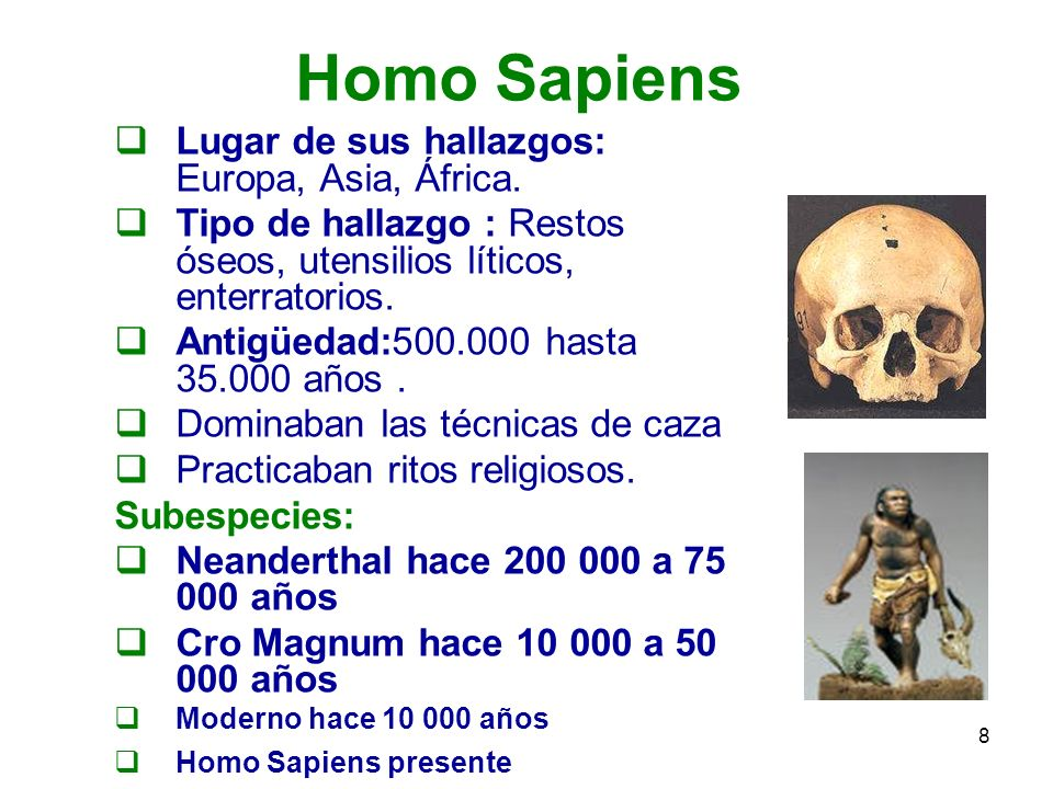 Homo Sapiens Lugar de sus hallazgos: Europa, Asia, África.