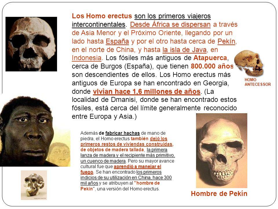 Los Homo erectus son los primeros viajeros intercontinentales