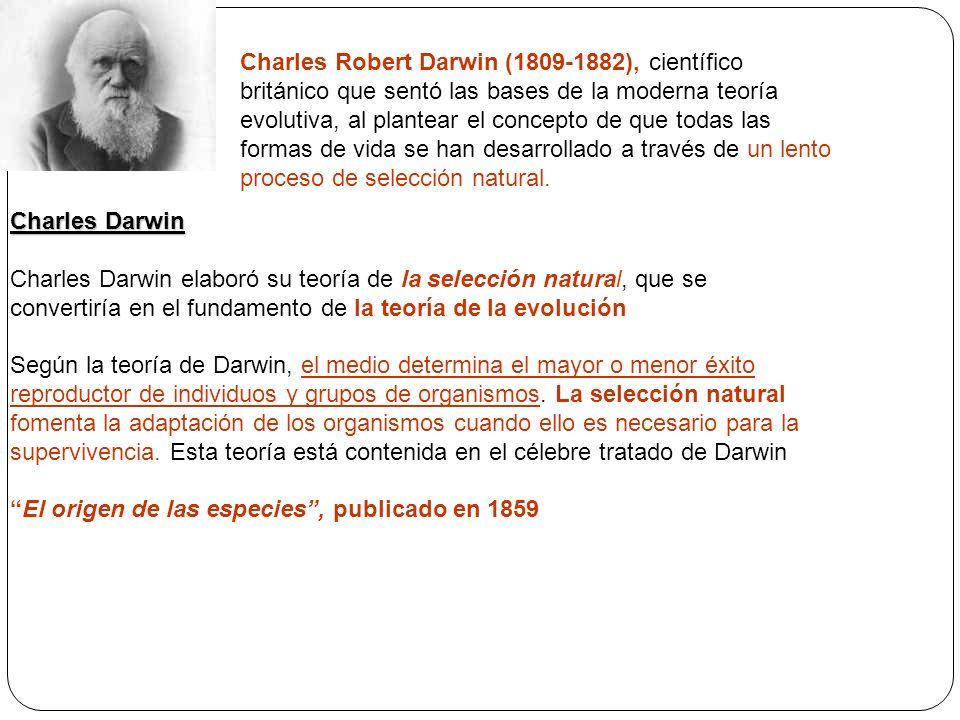 Charles Robert Darwin (1809-1882), científico británico que sentó las bases de la moderna teoría evolutiva, al plantear el concepto de que todas las formas de vida se han desarrollado a través de un lento proceso de selección natural.
