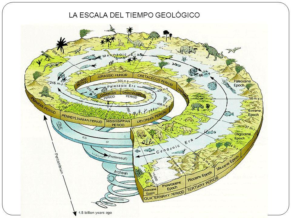 LA ESCALA DEL TIEMPO GEOLÓGICO
