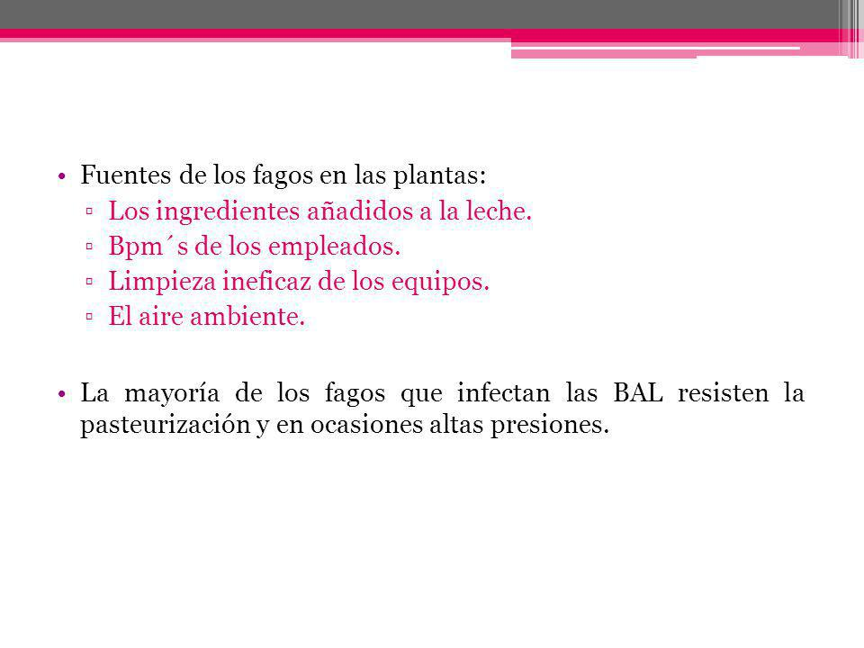 Fuentes de los fagos en las plantas: