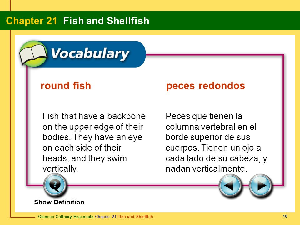 round fish peces redondos