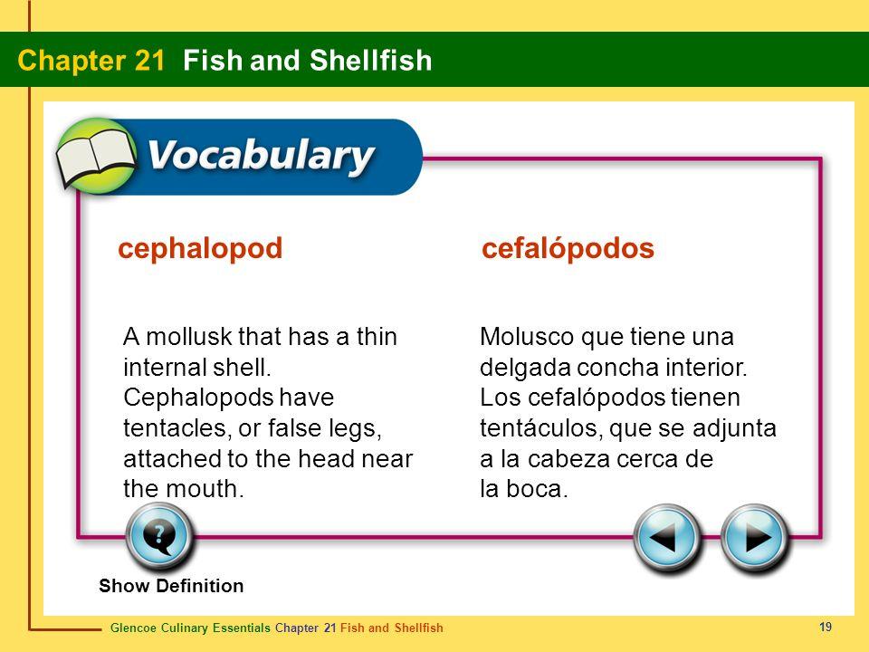 cephalopod cefalópodos