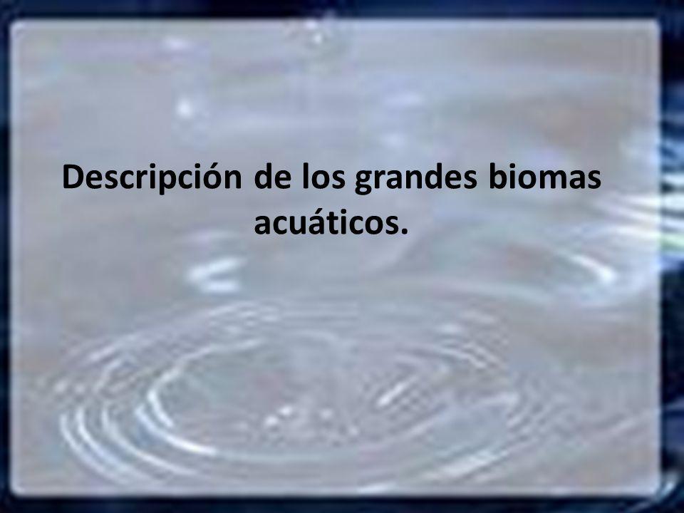 Descripción de los grandes biomas acuáticos.