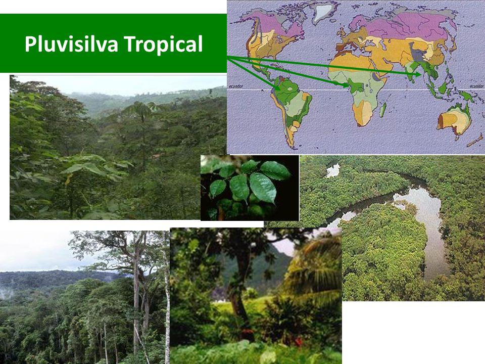Pluvisilva Tropical