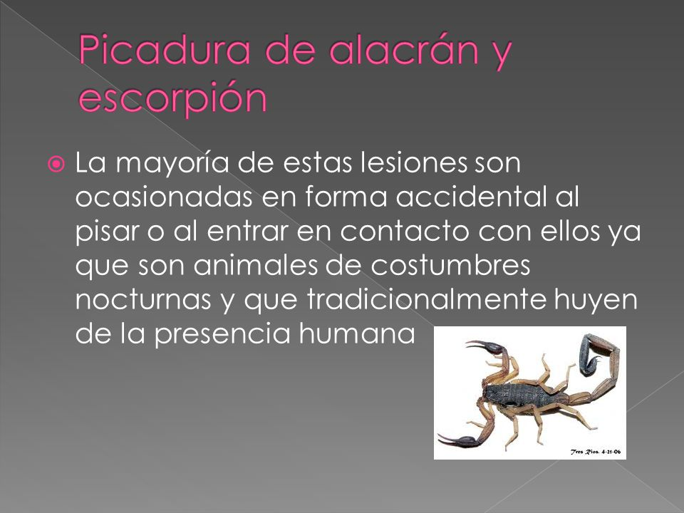 Picadura de alacrán y escorpión