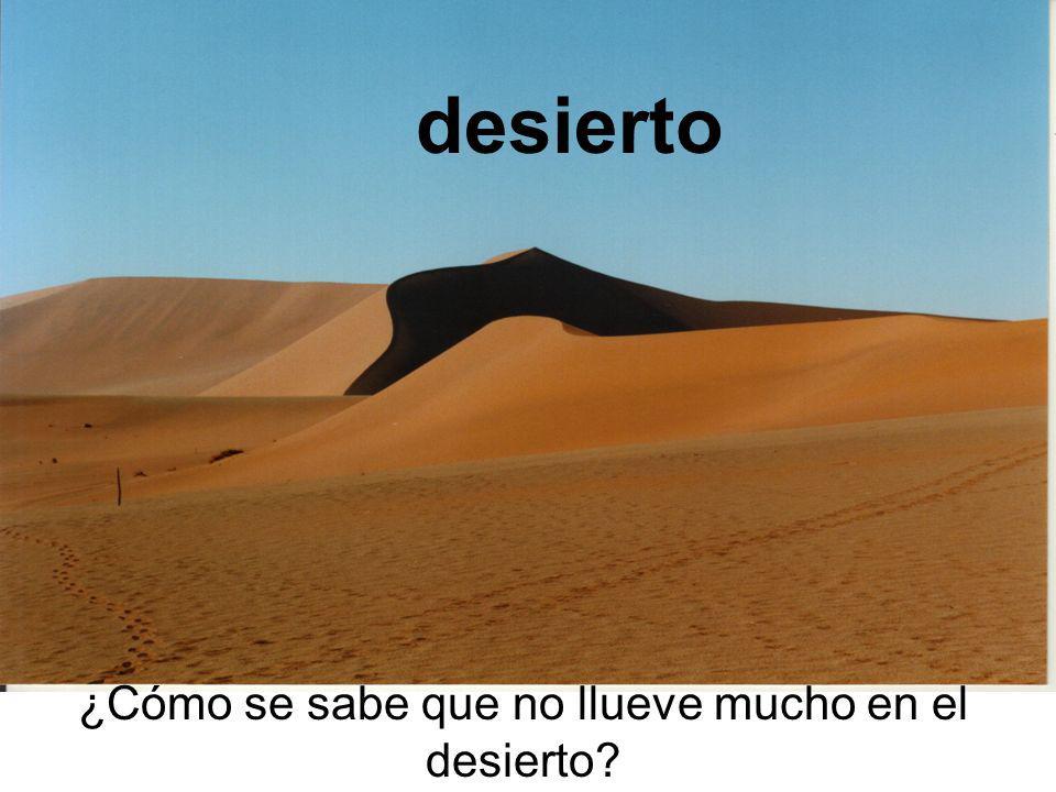 ¿Cómo se sabe que no llueve mucho en el desierto